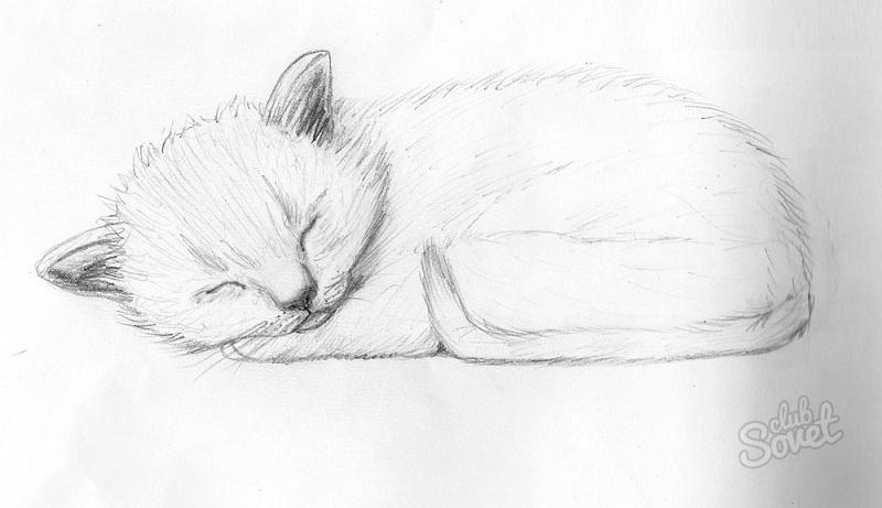 Unduh 67+  Gambar Kucing Menggunakan Pensil Imut HD