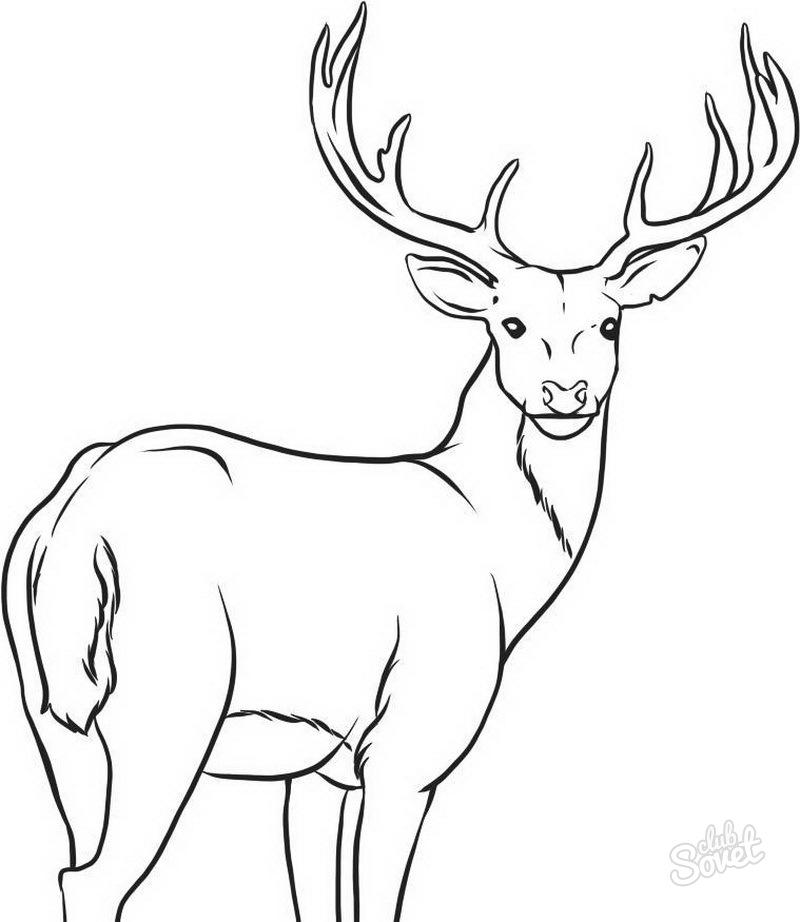 Cómo Dibujar Un Ciervo Con Un Lápiz Para Niños Cómo Dibujar Un